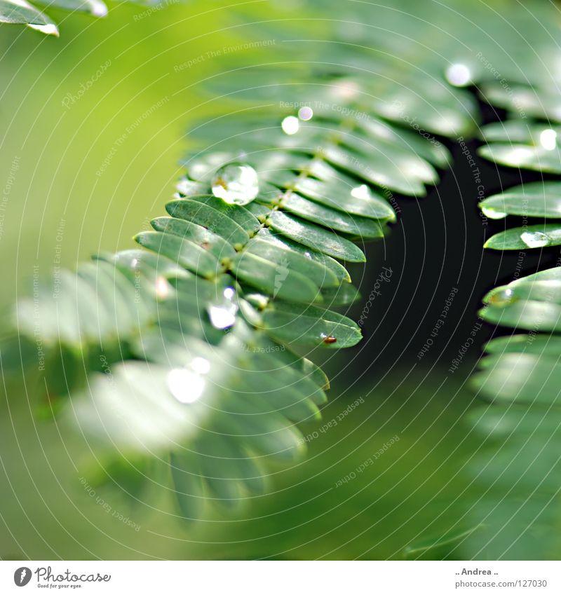 Tau Bioprodukte elegant Freude schön Leiter Umwelt Natur Pflanze Wassertropfen Regen glänzend träumen Wachstum dunkel frisch modern nass weich grün Gefühle