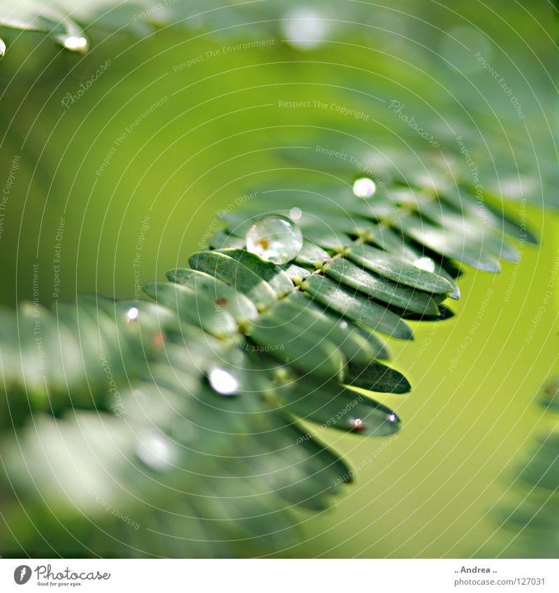 Tau III Natur Pflanze schön grün Farbe Freude dunkel Umwelt Gefühle Regen träumen glänzend Wachstum frisch elegant modern