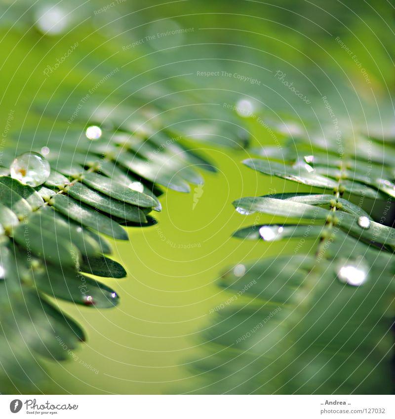 Tau III Bioprodukte elegant Freude schön Leiter Umwelt Natur Pflanze Wassertropfen Regen glänzend träumen Wachstum dunkel frisch modern nass weich grün Gefühle