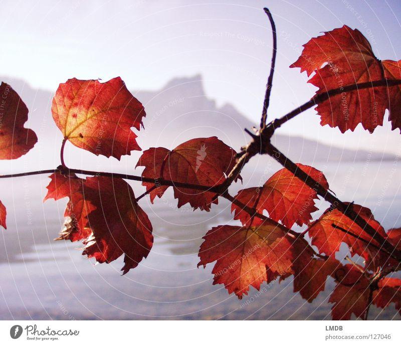 Drachenwand und Feuerlaub See Blatt Nebel unklar rot grau braun Herbst September Oktober November Ferne nah Scheune Salzkammergut Österreich Horizont