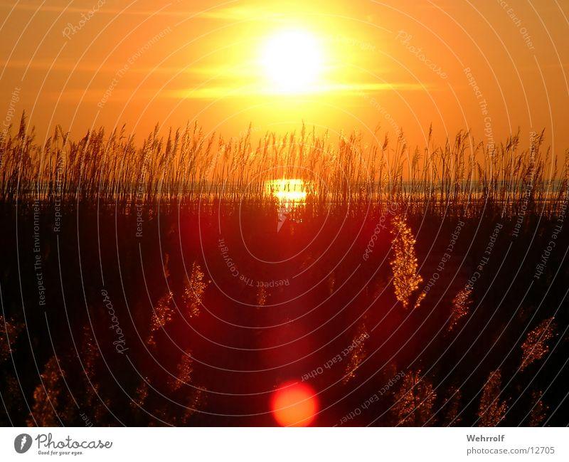 Sonnenuntergang1 Gras Meer Sehnsucht Natur Wasser Wattenmeer Sonnenutergang
