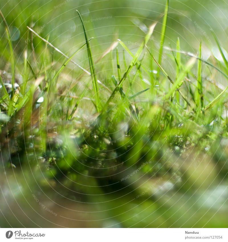 Vorfreude grün Sommer Freude Wiese Gras Frühling Wärme frisch Wachstum liegen Physik Duft Halm Liegewiese sprießen faulenzen