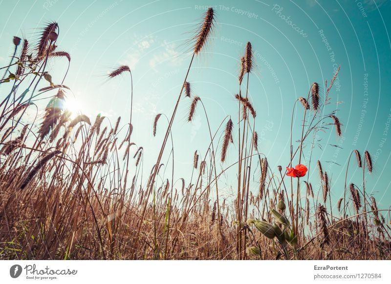 Feld Himmel Natur blau Pflanze Sommer Sonne Blume rot Landschaft Umwelt Wärme Zusammensein orange Kraft stehen