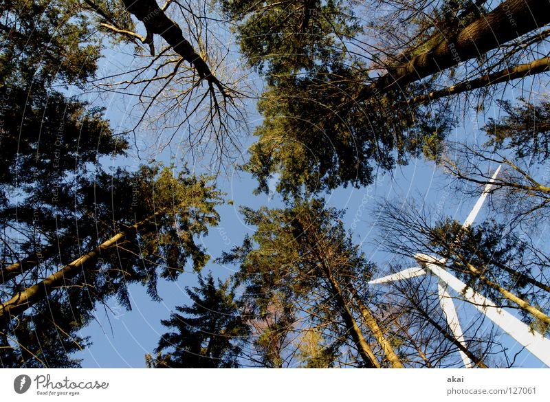 Windkraft am Roßkopf 8 Himmel Nadelbaum Wald himmelblau Geometrie Laubbaum Perspektive Nadelwald Waldwiese Paradies Waldlichtung Windkraftanlage Elektrizität
