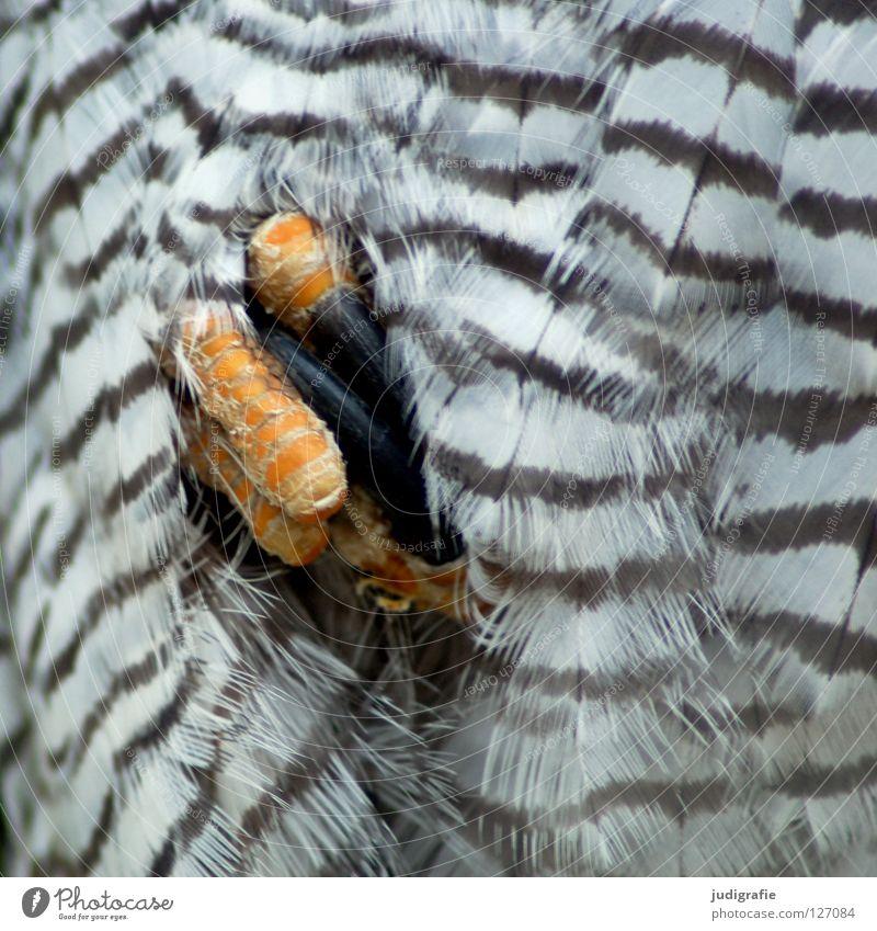 Greif Vogel Bussard Mäusebussard Krallen Faust Hand Feder Muster Streifen Tier Greifvogel Umwelt gelb weiß schwarz braun Makroaufnahme Nahaufnahme Fuß