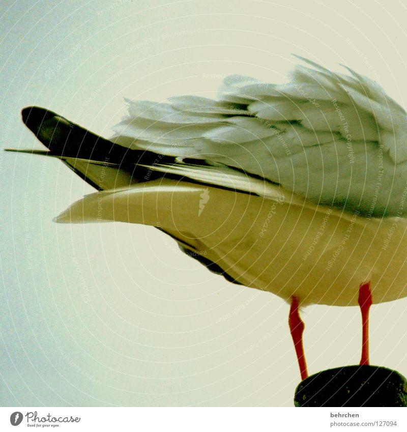bringt vogelscheiße auf dem kopf... Farbfoto Außenaufnahme Menschenleer Sommer Strand Himmel Wolken Vogel Flügel fliegen stehen Wachsamkeit Sorge Möwe
