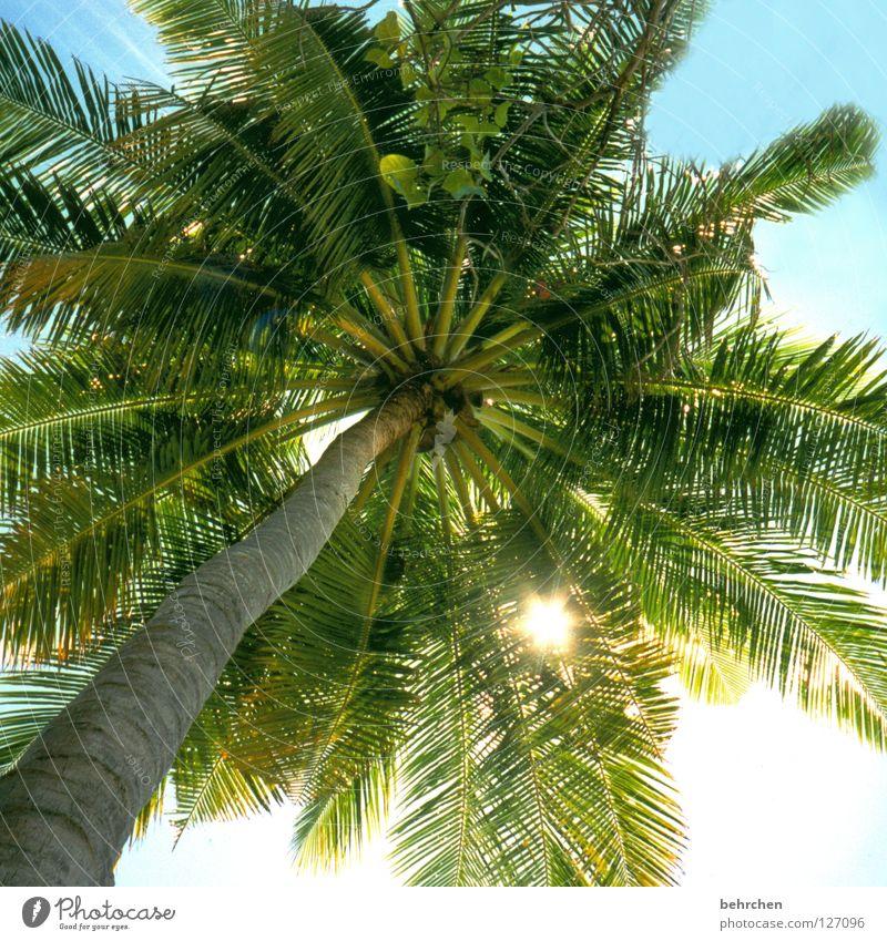 mein sonnenschirm Himmel Ferien & Urlaub & Reisen grün Sommer Sonne Meer Blatt Küste träumen Insel genießen Asien Sonnenbad Sonnenschirm Palme Malediven