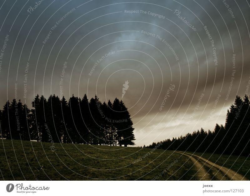 Hoffnung Himmel Baum ruhig Wolken Wald dunkel Erholung Wiese Wege & Pfade Denken Wärme Landschaft Stimmung Kraft Feld