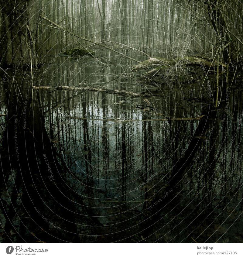 missisipi burningburg Natur Wasser grün Baum Umwelt Tod Leben Gefühle grau Angst Nebel leer Suche Fluss verfaulen tauchen