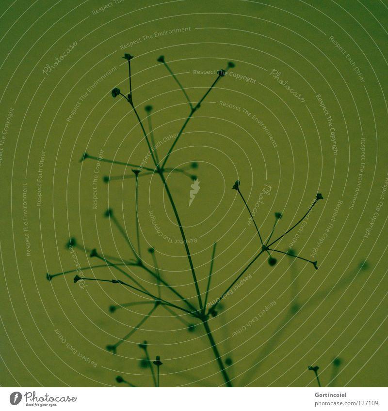 Pflanzen haben Style III schwarz Stil Gras Linie Design Dekoration & Verzierung Streifen Lebewesen Kurve Halm Blütenknospen Kohlendioxid Sauerstoff kreuzen