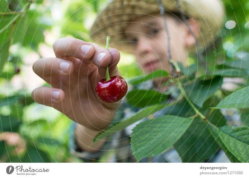 Kinderernte Morello Kirschen Natur grün Sommer Hand rot Freude Mädchen Essen klein Familie & Verwandtschaft Garten Frucht frisch Kindheit niedlich