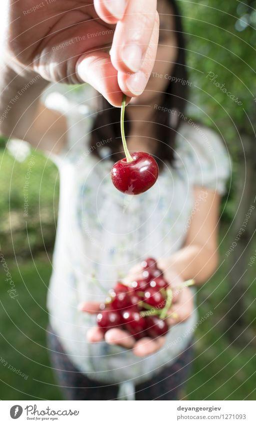 Frauensammeln Kirschen mit Korb Natur Pflanze grün schön Sommer weiß Hand rot Mädchen Erwachsene natürlich Garten Frucht frisch Ernte