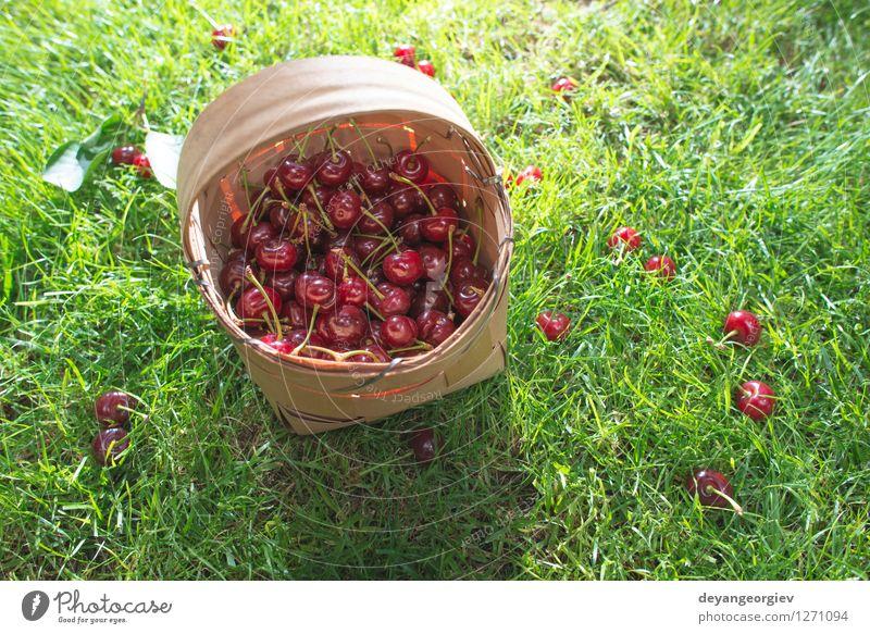 Morello Kirschen im Korb auf der grünen Wiese Natur schön Sommer Baum rot Blatt Gras natürlich Garten Frucht frisch Jahreszeiten Ernte saftig