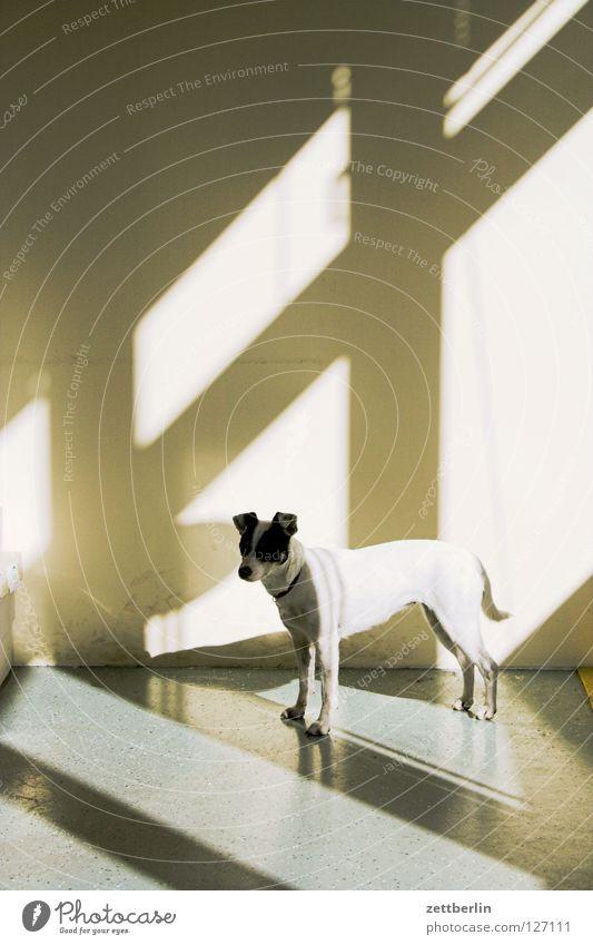 Hund Fenster Raum leer Häusliches Leben Umzug (Wohnungswechsel) Säugetier Versicherung Lichteinfall Postbote Fensterkreuz Haushund
