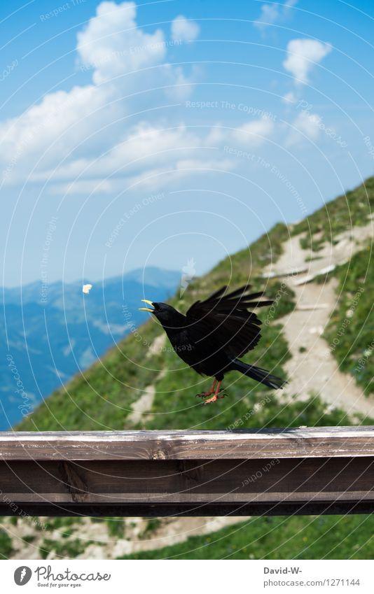 kurz vor dem Verzehr Glück Leben Ferien & Urlaub & Reisen Tourismus Ausflug Abenteuer Ferne Sommer Sommerurlaub Berge u. Gebirge wandern Umwelt Alpen Gipfel