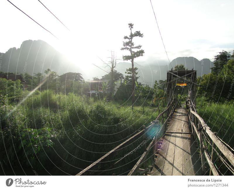 Der Weg ist das Ziel Natur Ferien & Urlaub & Reisen grün Einsamkeit Ferne Berge u. Gebirge Wege & Pfade natürlich Holz Freiheit träumen wild leuchten Idylle