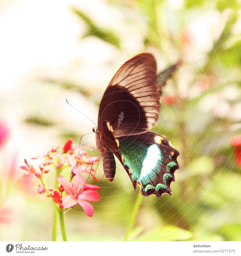 hübsch - hübscher - am hübschesten Natur Pflanze Tier Frühling Sommer Blume Blatt Blüte Garten Park Wiese Wildtier Schmetterling Flügel 1 Blühend fliegen