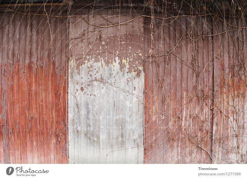 kümmerlich | Irgendwie alles - also stimmig. Pflanze weiß Herbst Gefühle Holz braun Wachstum einfach trashig kahl Scheune Gebäude