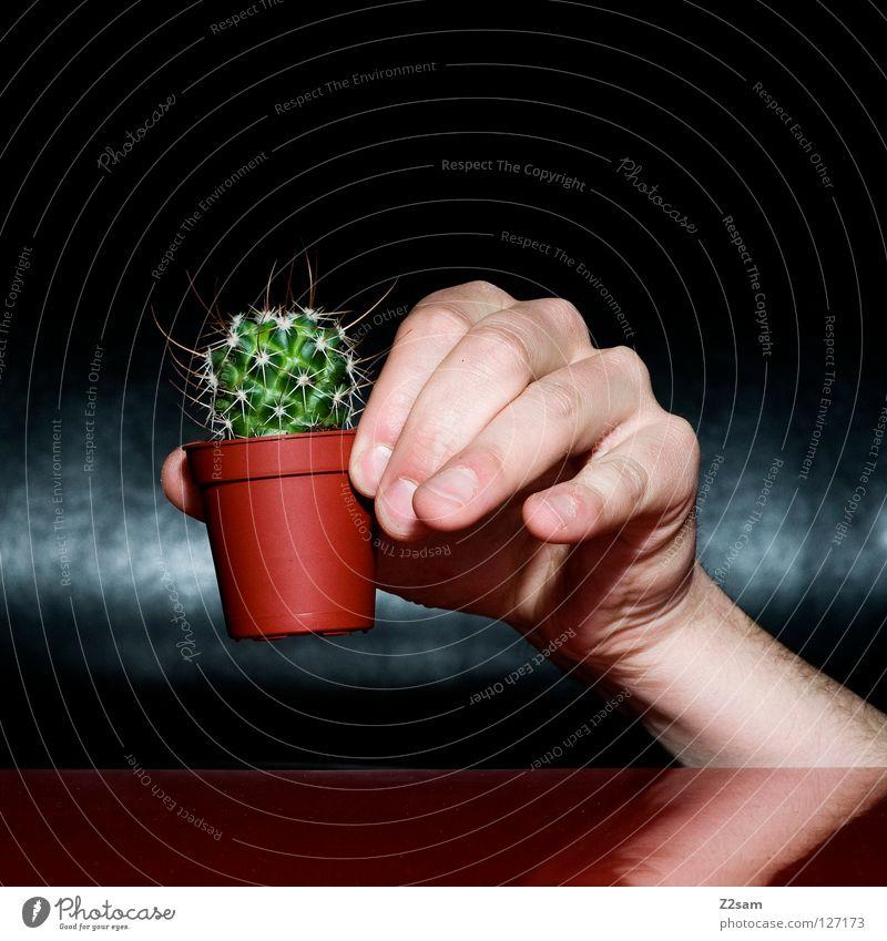so, ich lass dich jetzt in ruhe Mensch Natur Hand grün Pflanze rot schwarz dunkel braun Angst lustig glänzend Finger verrückt Tisch Spitze
