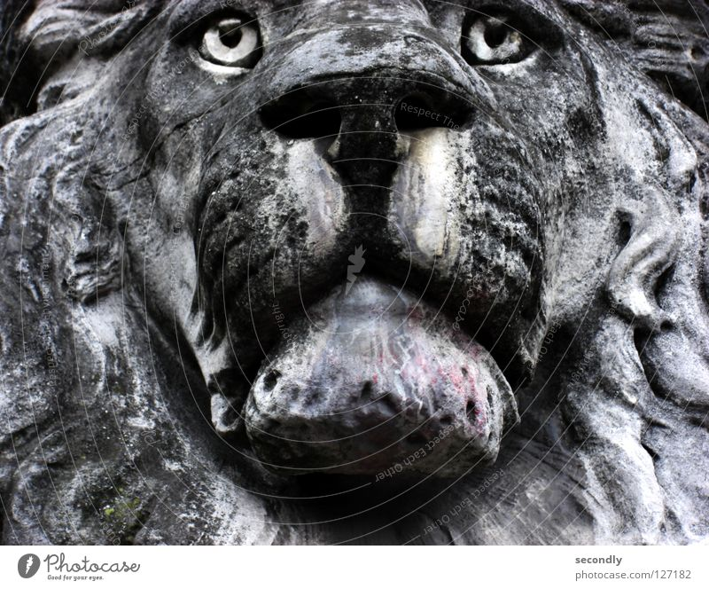 lauernder Löwe alt Tier grau Stein Traurigkeit Trauer Vergänglichkeit Mitte Statue Löwe Schnauze Mineralien ausgebleicht porös Saurer Regen Glasauge