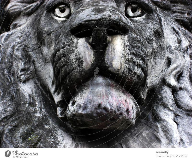 lauernder Löwe alt Tier grau Stein Traurigkeit Trauer Vergänglichkeit Mitte Statue Schnauze Mineralien ausgebleicht porös Saurer Regen Glasauge