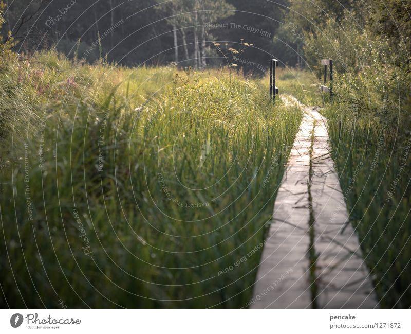 zwischendurch Natur Sommer Wasser Landschaft Wald Gras Wege & Pfade Erde wandern Sträucher Perspektive Zukunft Brücke Urelemente Sicherheit geheimnisvoll