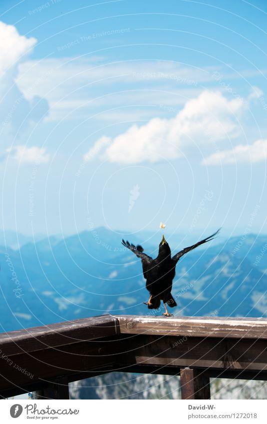 ich hab's Umwelt Natur Landschaft Luft Himmel Wolken Sommer Schönes Wetter Hügel Felsen Alpen Berge u. Gebirge Tier Vogel Flügel 1 Bewegung fangen zielen Beine