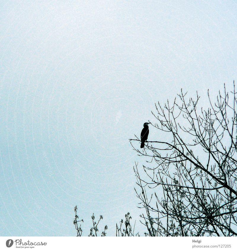 Ausschau halten... Himmel weiß Baum blau schwarz Wolken oben Frühling grau Fuß Vogel Metall Küste glänzend fliegen groß