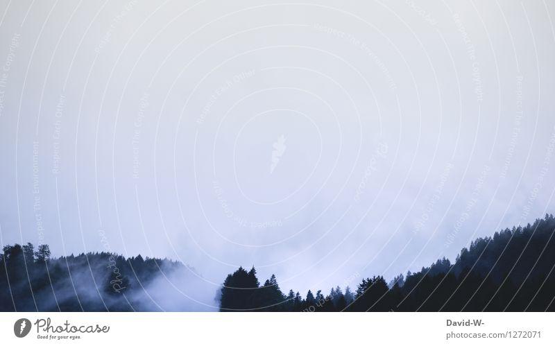 vom Nebel verschlungen Umwelt Natur Landschaft Urelemente Luft Himmel Herbst Klima Klimawandel Wetter Unwetter Wald Gefühle schön achtsam Wachsamkeit Angst