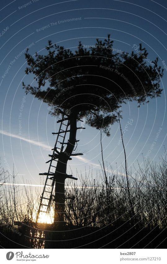 Haus im Baum ... Natur Himmel Sonne blau Herbst Sträucher Baumstamm Leiter