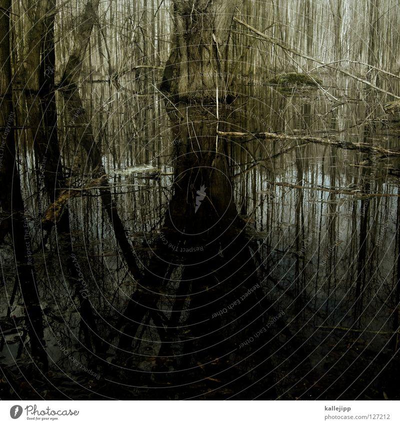 drogensumpf Natur Wasser grün Baum Umwelt Tod Leben Gefühle grau Angst Nebel leer Suche verfaulen tauchen gruselig