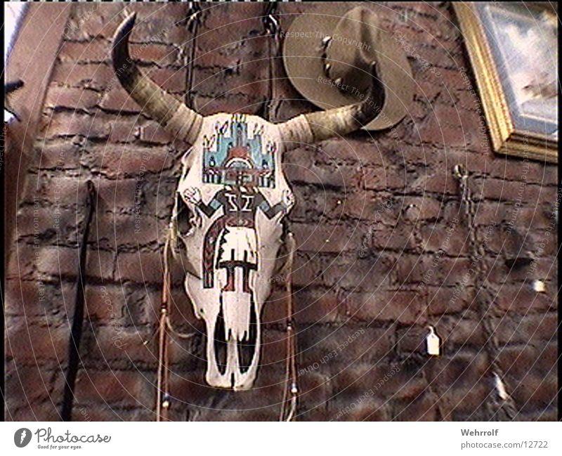nach buffalo bill USA Amerika historisch Büffel