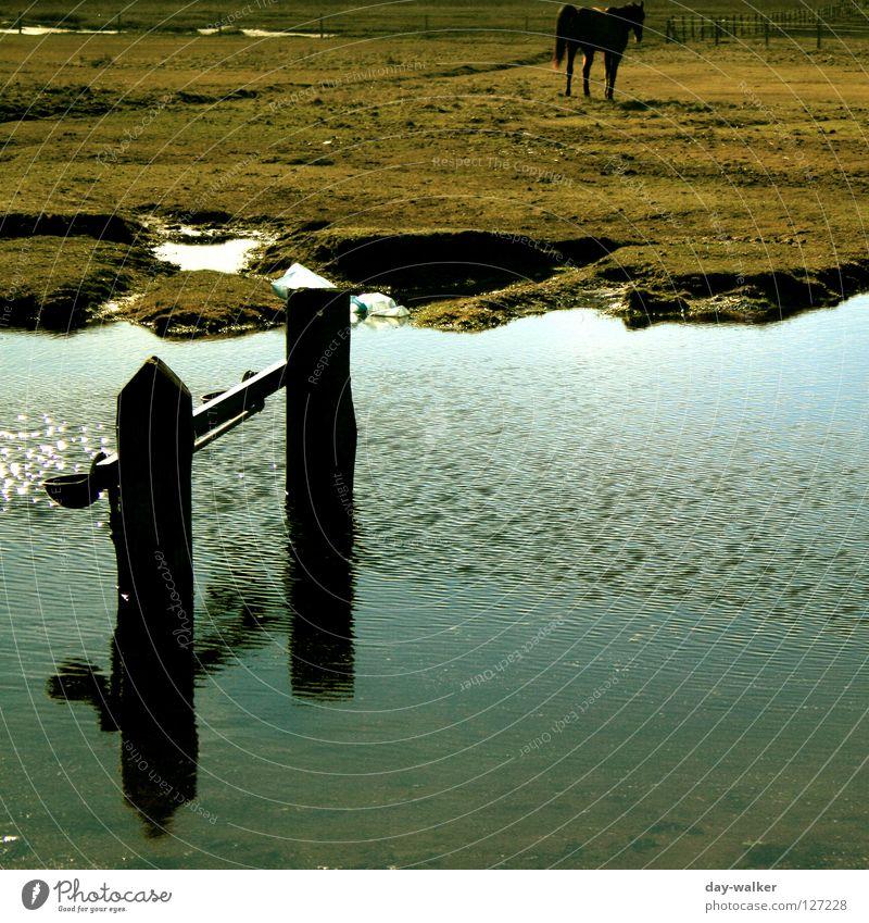 Über Wasser Pferd Steppe Gelände Feld Weide Wiese Pferch Pfütze Bach Reflexion & Spiegelung Wellen Säugetier Fluss Niveau Rasen Wasserstelle Nordsee baltrum