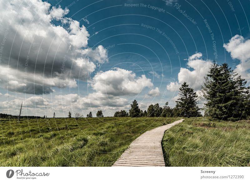 Auf nach Fluffighausen... Ferien & Urlaub & Reisen Tourismus Ausflug wandern Natur Landschaft Pflanze Himmel Wolken Sommer Schönes Wetter Baum Gras Sträucher