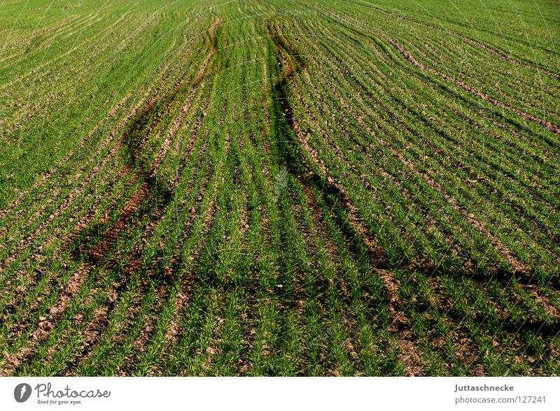 Der Bauer war besoffen Spuren Feld säen Aussaat Frühling pflügen Pflug grün Wachstum Gemüse Furche Amerika Natur Juttaschnecke frisches grün austreibenGetreide