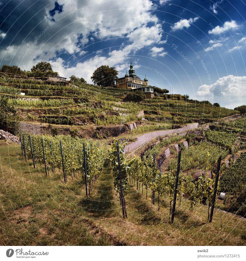 Müller-Thurgau Himmel Natur Ferien & Urlaub & Reisen Baum Landschaft Wolken Umwelt Gras Horizont Wetter Tourismus Idylle genießen Ausflug Klima Schönes Wetter