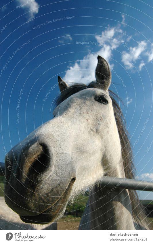 ...und sonst ?? Pferd Weitwinkel Landwirtschaft Tier Wiese Sommer grün zyan Ferien & Urlaub & Reisen Schwarzwald Umwelt Biotop ökologisch Wolken Gras schön