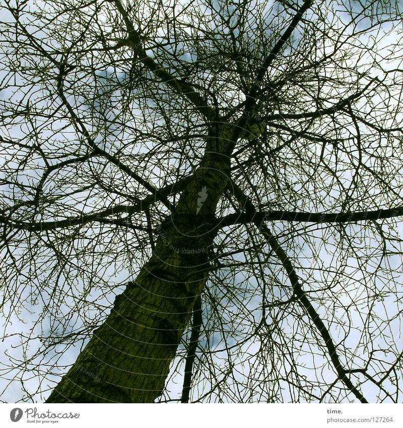 Der Himmel über Berlin Baum Baumkrone Holz Sträucher Denken durcheinander Pflanze Grünpflanze laublos aufstrebend Verkehrswege Kraft Ast Zweig nachdenken
