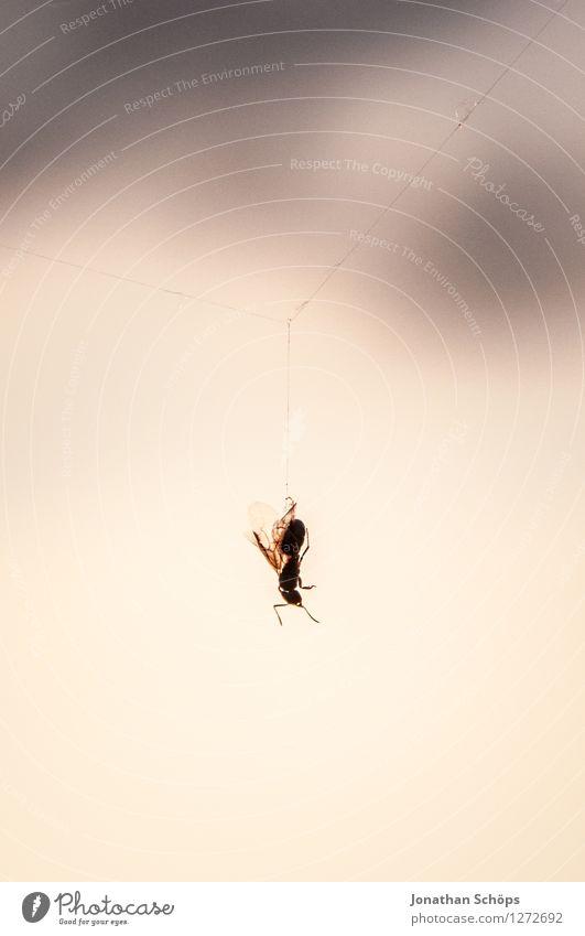 mal locker abhängen Tier Totes Tier Fliege Spinne 1 ästhetisch bedrohlich Tod Insekt Spinnennetz Außenaufnahme Unschärfe Detailaufnahme Nahaufnahme