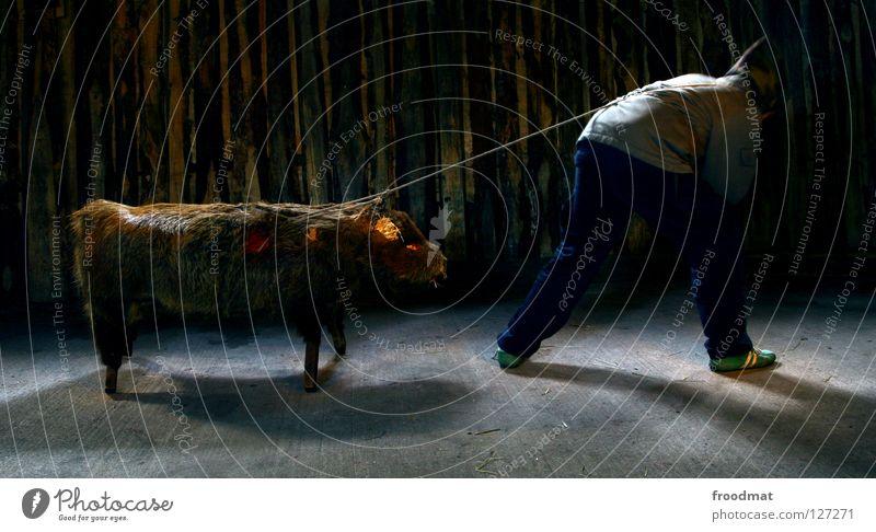 Schweinearbeit Tier Tod dunkel lustig Seil Fleisch tierisch Surrealismus anstrengen Säugetier Hausschwein ziehen Langzeitbelichtung massiv