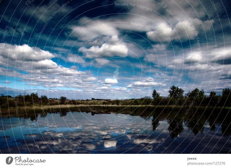 Klarheit II Natur Wasser Himmel Baum blau ruhig Wolken Einsamkeit Ferne kalt Erholung Freiheit Traurigkeit See Landschaft Küste