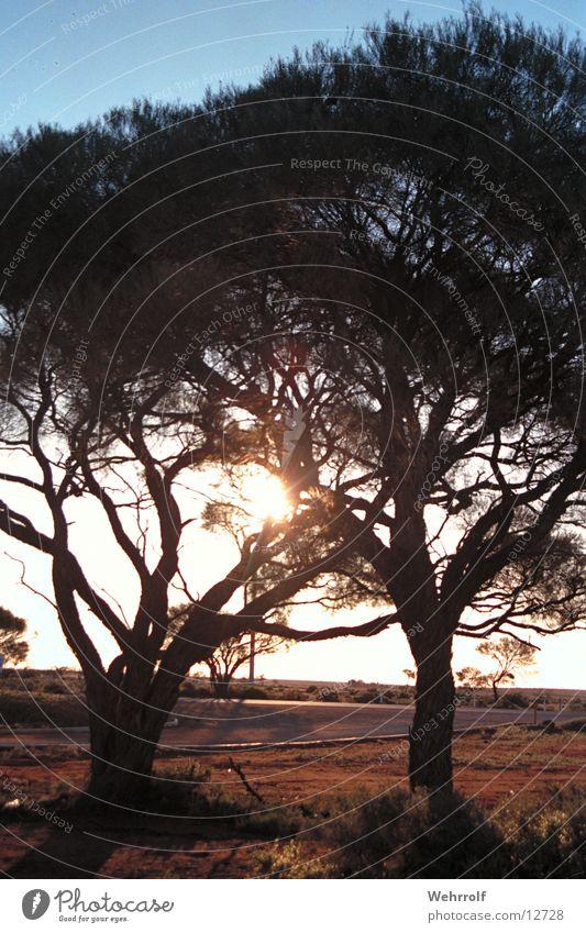 Outback3 Australien Sonnenuntergang Natur