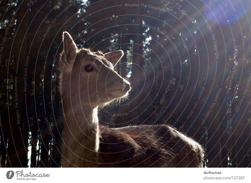 Kitschkitz Natur schön Sonne Tier Wald Angst Wildtier süß niedlich himmlisch Tiergesicht Säugetier Gott Vorsicht mystisch