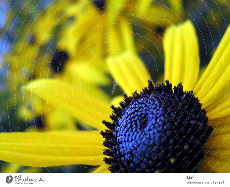 Blumenwiese blau Sommer gelb Farbe Wiese Blüte glänzend Kraft Blühend tief Pollen Stempel Blütenblatt Jungpflanze