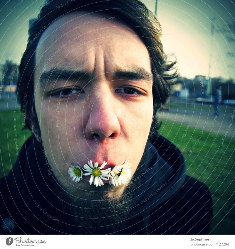 Frühling zum Frühstück Mensch Jugendliche Pflanze Gesicht Erwachsene Junger Mann Frühling lustig Blüte 18-30 Jahre Bart Gänseblümchen Unsinn Humor Vignettierung Stirnfalte