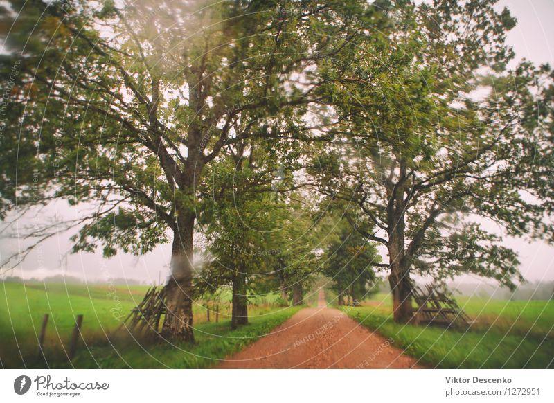 Schönes Licht durch nasses Glas auf orange Straße Natur Ferien & Urlaub & Reisen Bewegung Regen Wetter PKW Verkehr Ostsee fahren Unwetter Fahrzeug Konsistenz