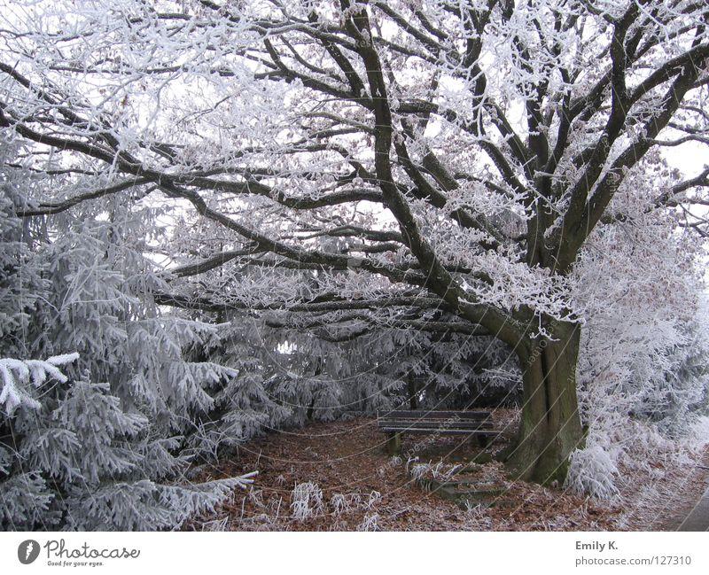 eingeschneit Natur alt Baum Winter Wald Landschaft kalt Schnee Wege & Pfade Freiheit hell Eis Frost Bank Kleinstadt