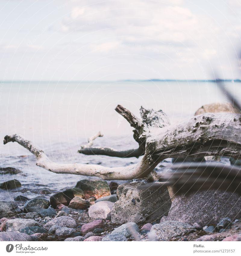 vertrocknet so nah am Wasser Ferien & Urlaub & Reisen Umwelt Natur Urelemente Sand Luft Himmel Horizont Pflanze Baum Wellen Küste Bucht Ostsee Meer Stein Holz