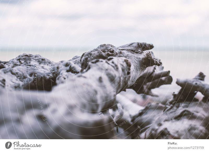 Holzlandschaft Umwelt Natur Pflanze Küste Strand alt trist trocken grau Baumstamm vertrocknet Ast Wurzelholz Treibholz Strandgut ausgebleicht Farbfoto