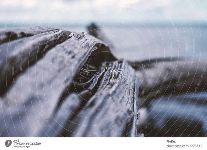 verwittert Umwelt Natur Pflanze Urelemente Dürre Baum Holz alt kaputt trocken grau Verfall Strandgut Baumrinde Baumstamm Ast Farbfoto Außenaufnahme Nahaufnahme